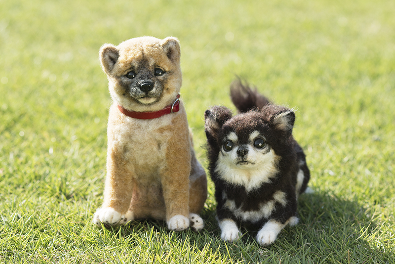 161227羊毛リアル愛犬メイン